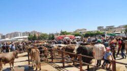 Hayvan pazarı açılıyor