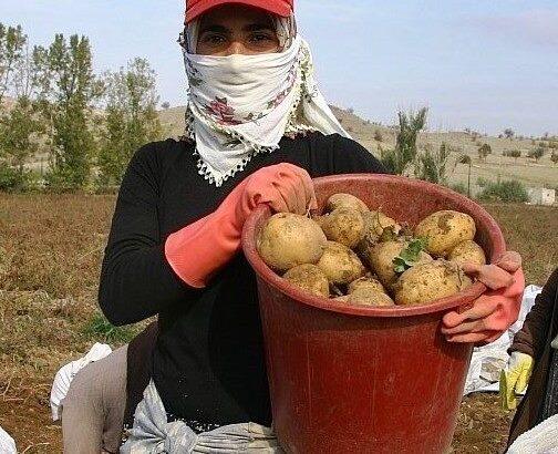 Patates üreticileri birliği kurulacak mı?